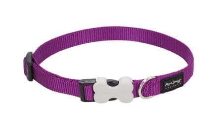 Red Dingo Dog collar Classic Purple