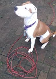 Dog Tie Out Cable